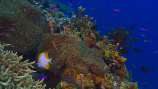 Dump Plan for Great Barrier Reef Condemned