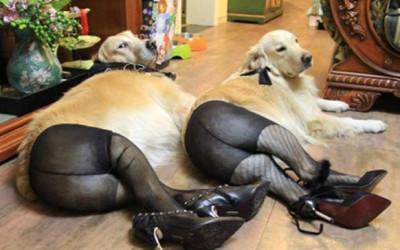dog pantyhose