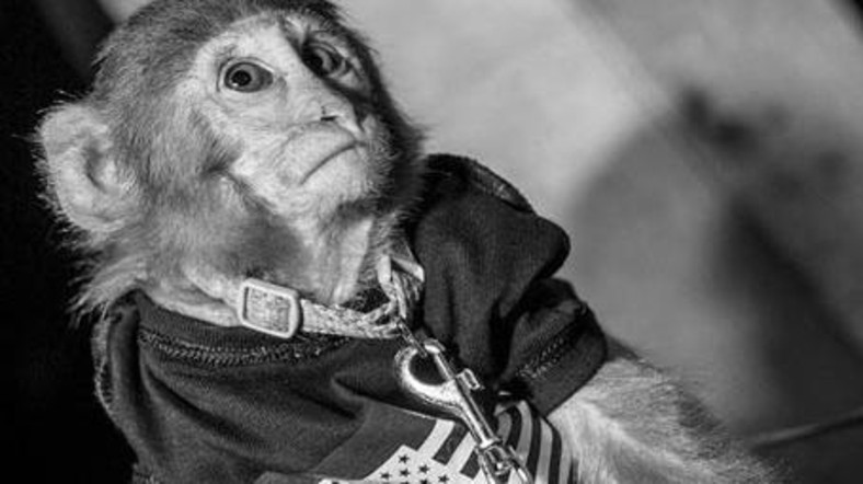 Dubai Nightclub Under Fire For Pictures Of Monkey On A Leash