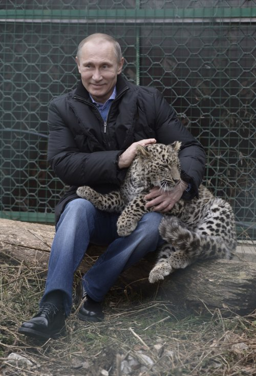Putin holds a Persian leopard during his visit to the Persian Leopard Breeding and Rehabilitation Centre in the Sochi national park near Sochi