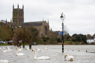 worcester swans