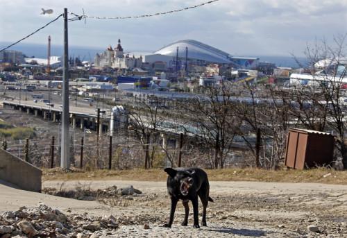 Sochi stray dogs