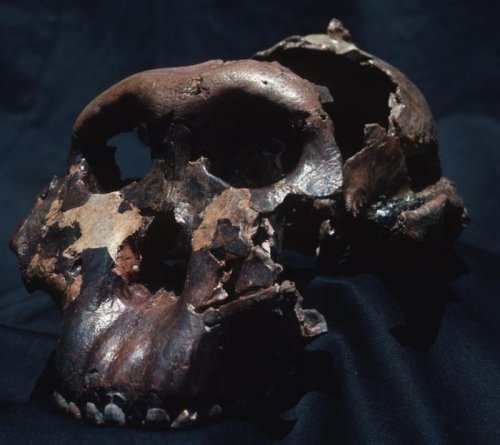 Scientists have found evidence of cannibalism such as human bones processed for food and tongues removed