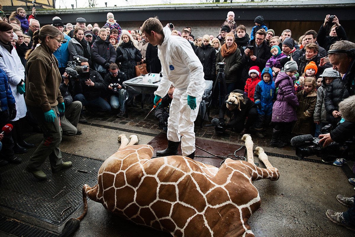 giraffe vet