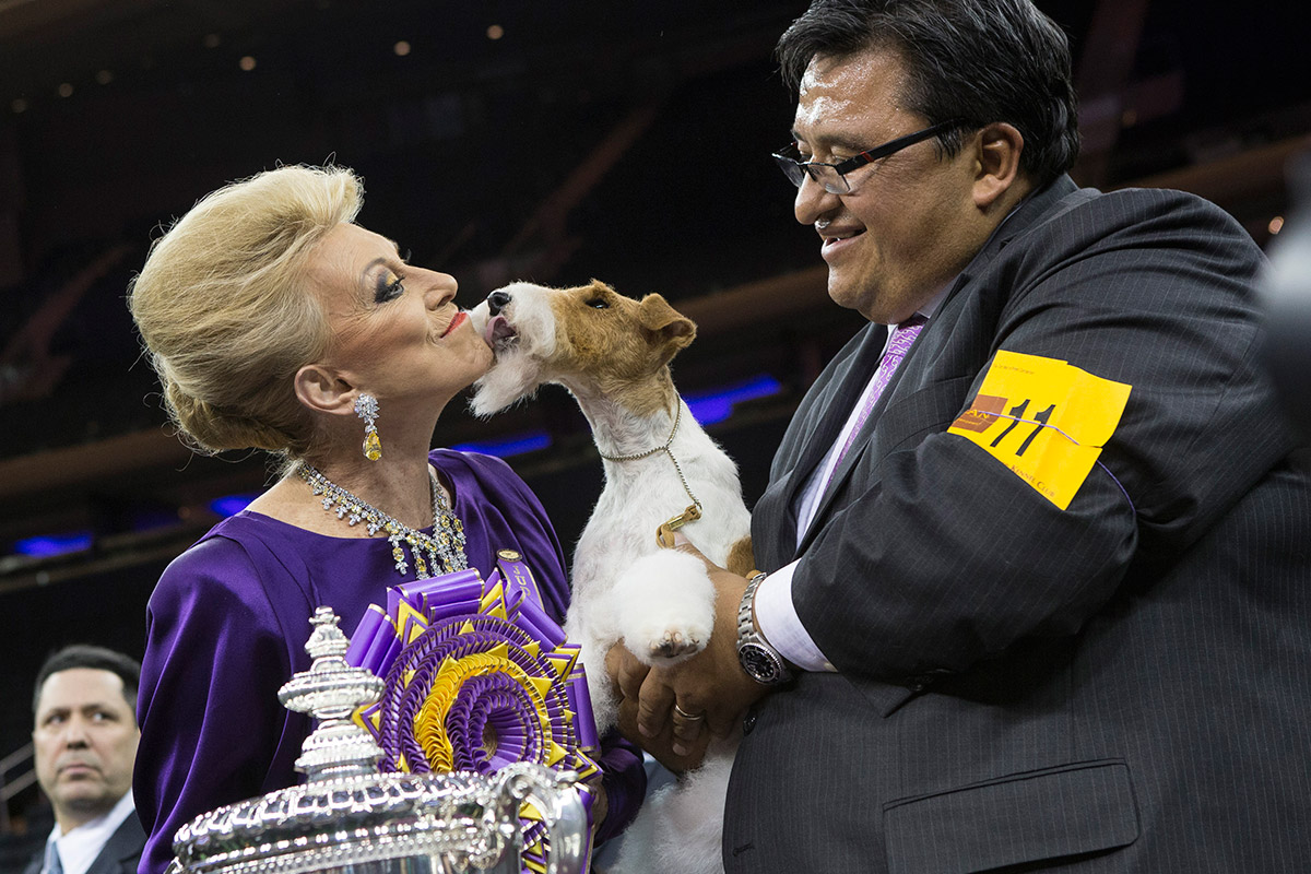 westminster best in show