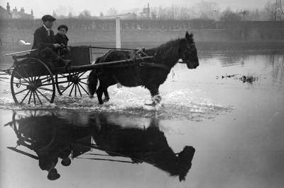 1915 pony