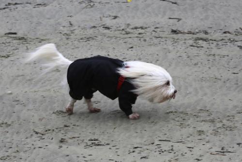 Windswept dog
