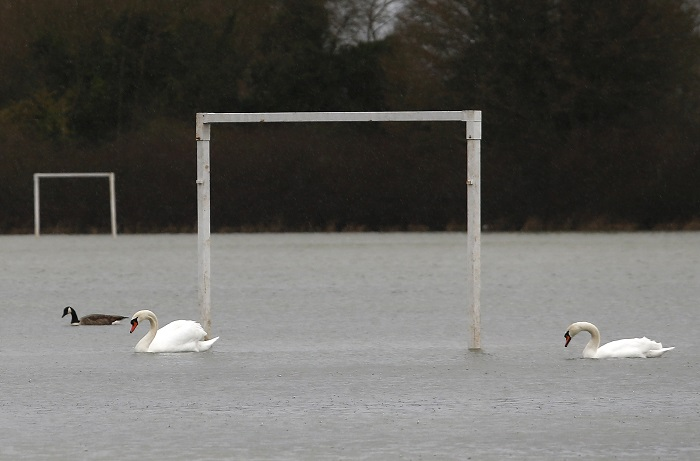 Swans on a football pitch