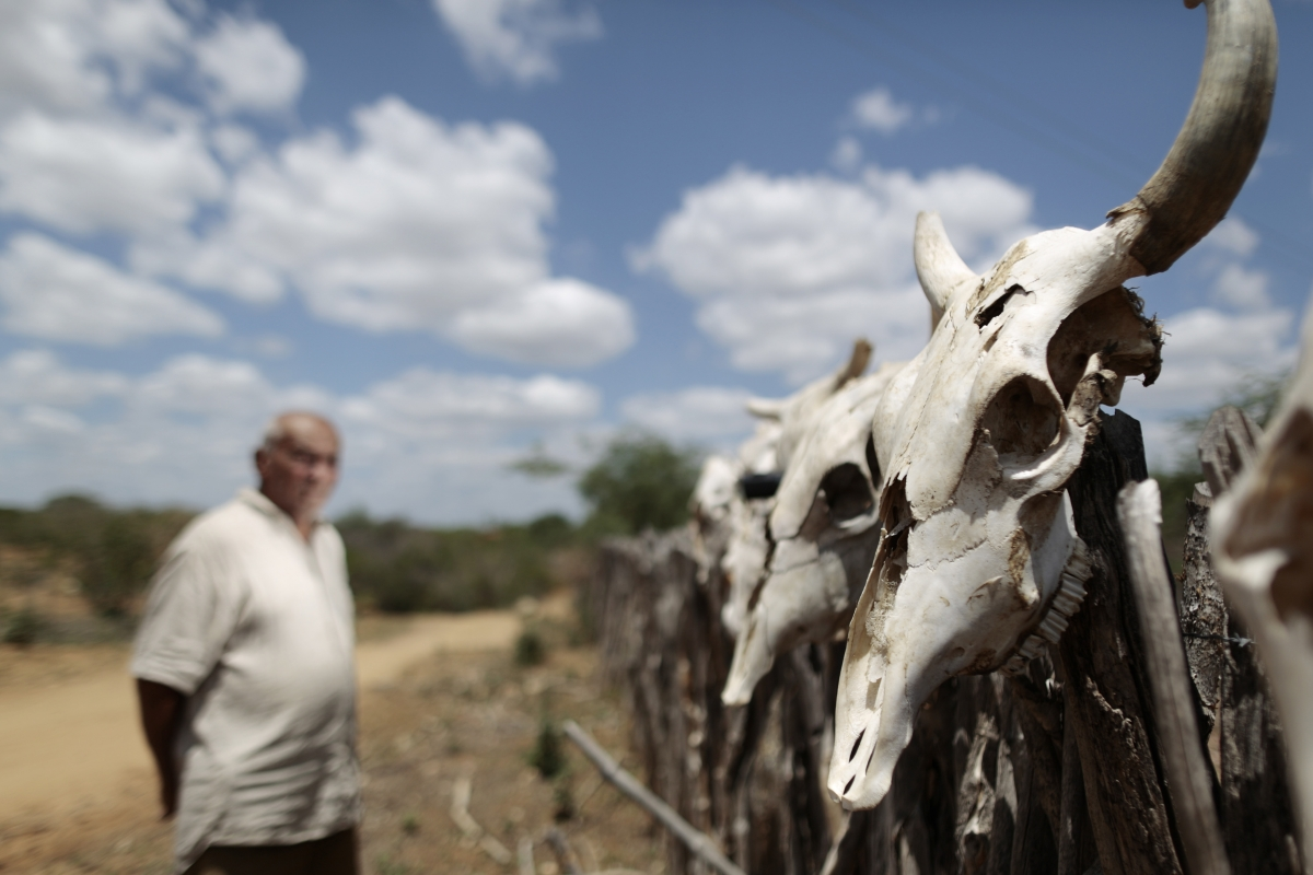 Brazil: Farmer Ulysses Flor, 85, stands near the skulls of some of his nearly 50 cows that died due to the prolonged drought near the city of Forest, Pernambuco state