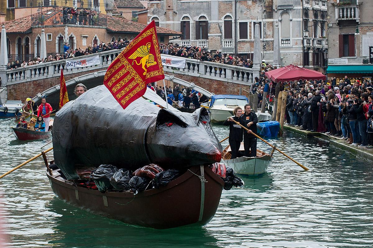 regatta rat