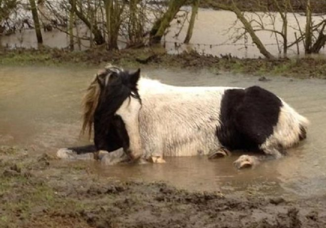 Horses left to die in a field in Leicester