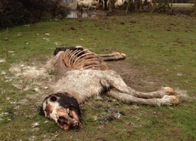 Shocking image of emaciated horse left to die in a field in Leicester