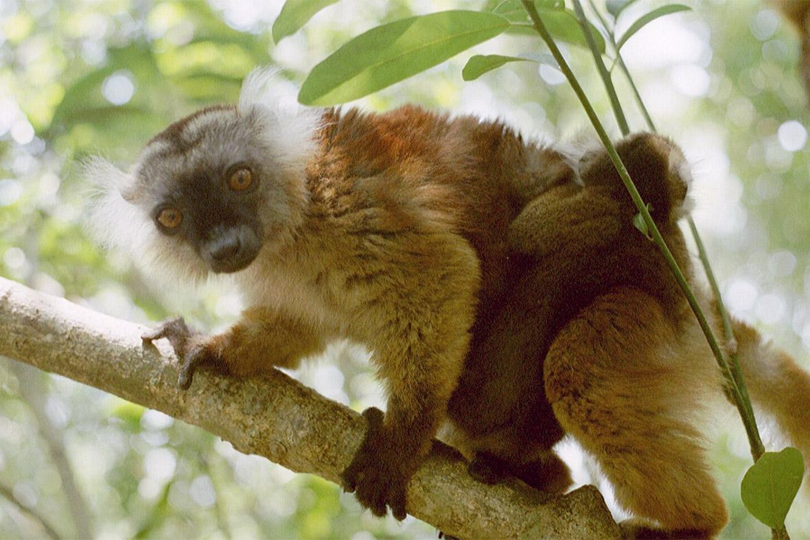 8. Nosy Be, Madagascar