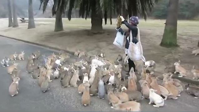 Japan: Woman Chased by Stampeding Herd of Rabbits