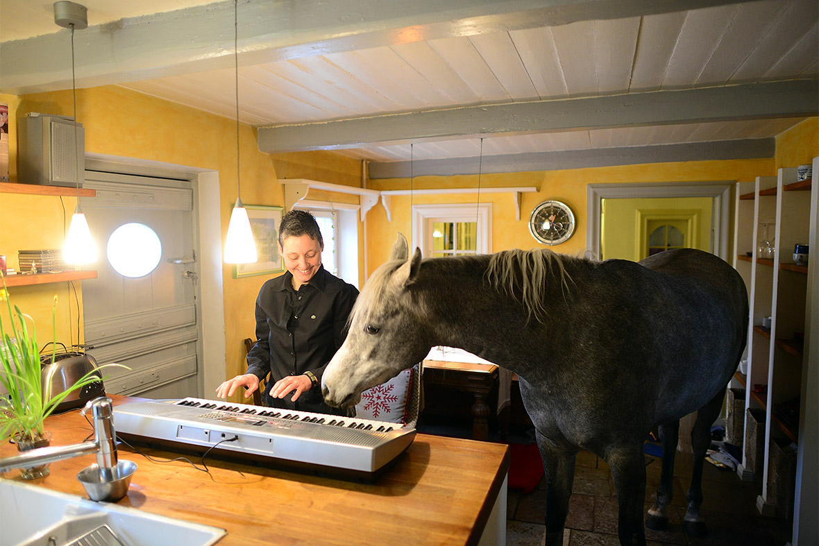 horse in house