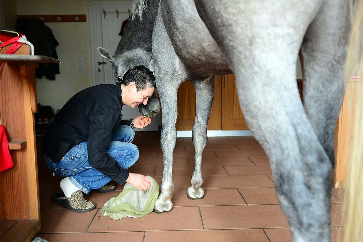 cleaning hooves