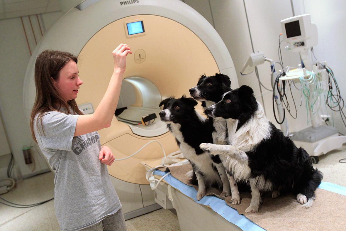 dogs MRI