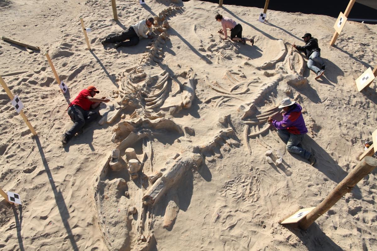 whale graveyard