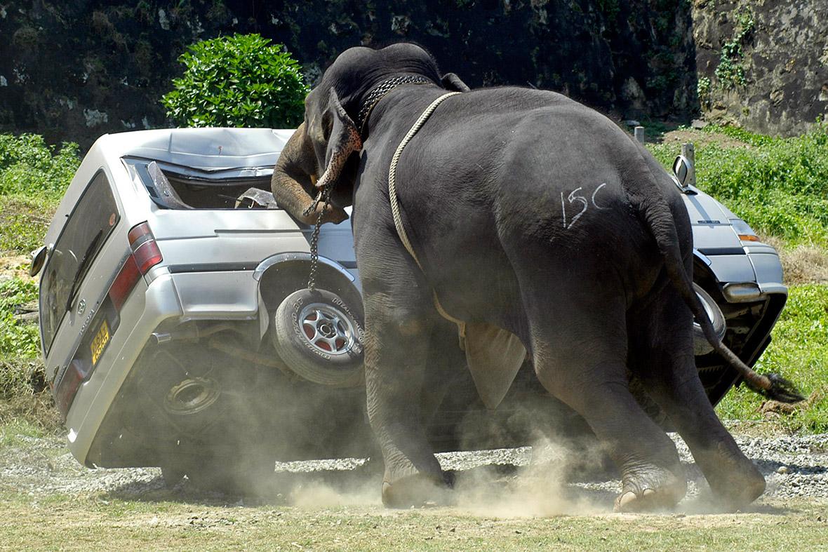 elephant bus