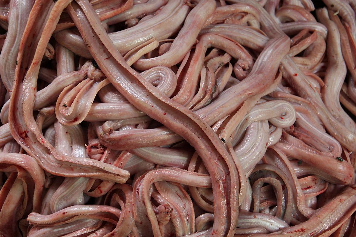 snake meat