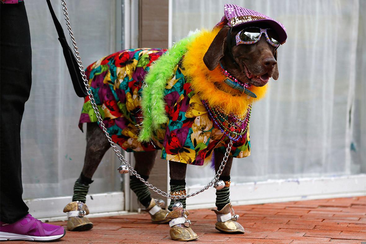 doggie gras