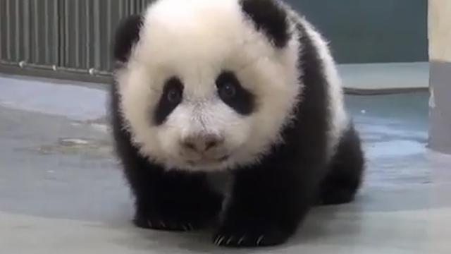 Taiwan: Go to Bed Baby Panda