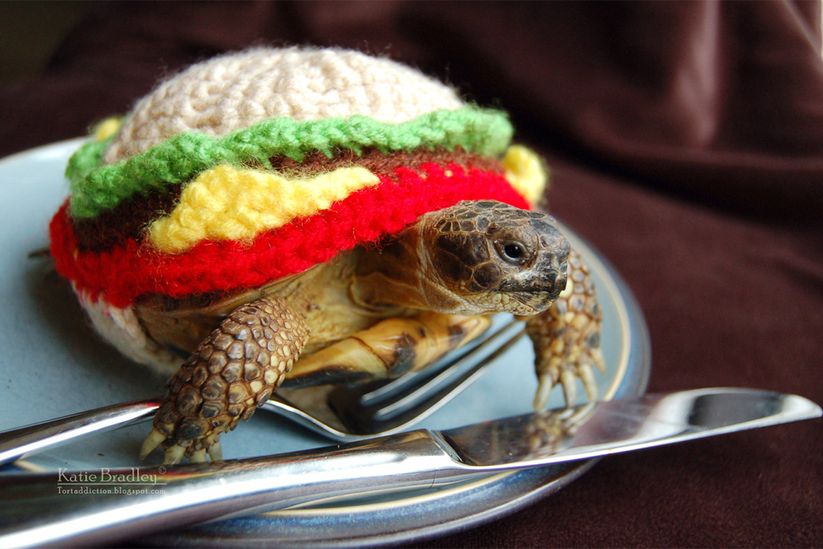 tortoise cheesburger
