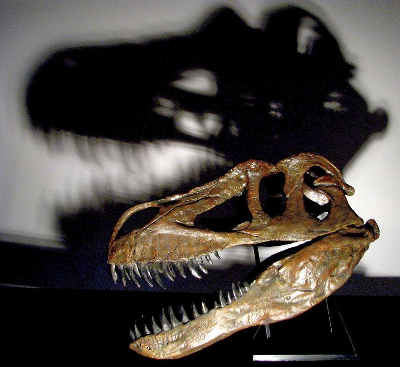 Torvosaurus dinosaur discovered