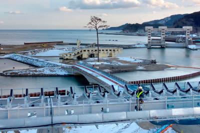 tsunami tree