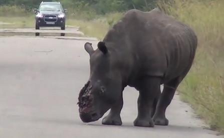 rhino horn cut off