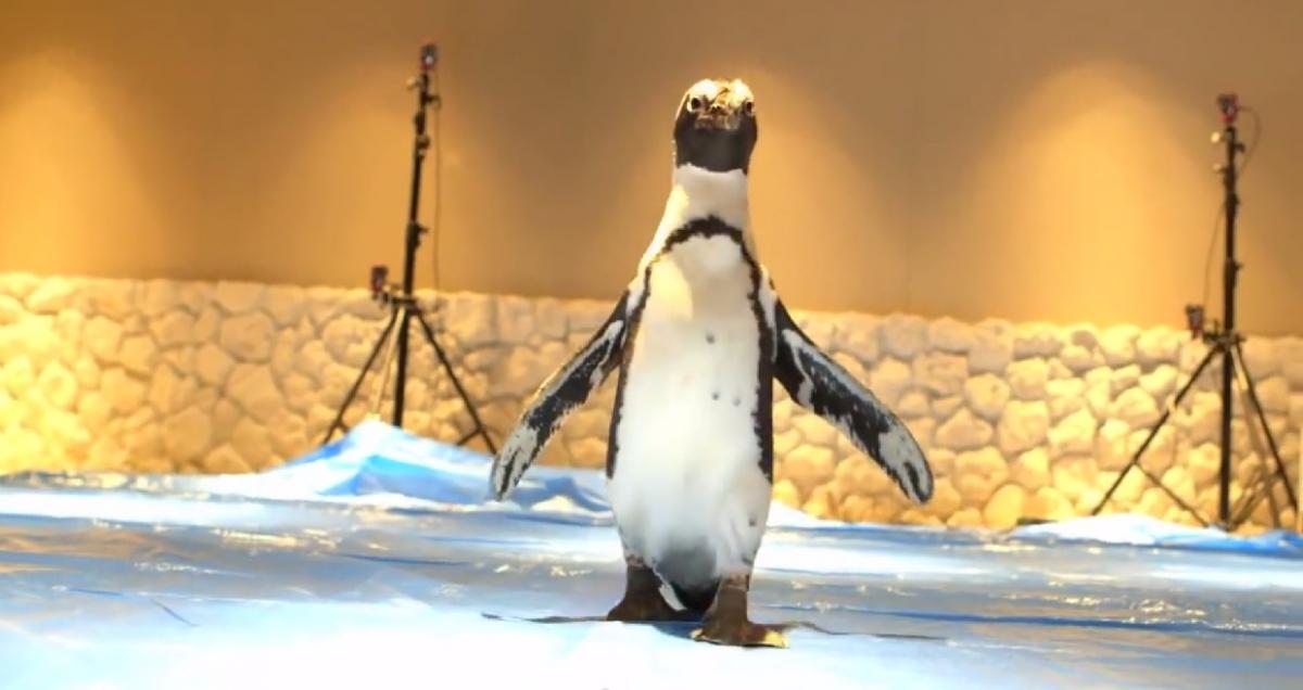 Penguin NAVI