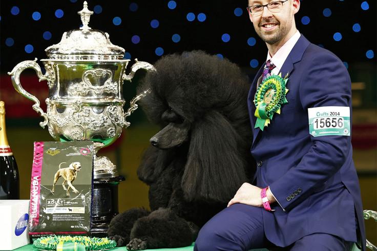 crufts winner