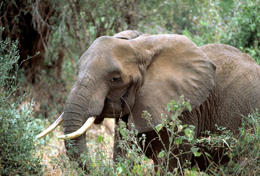 Elephant charges, kills big game hunter in Africa