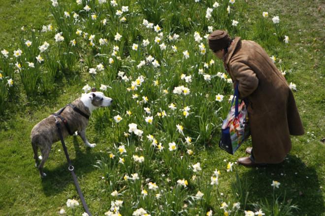 British Woman Marries Pet Dog