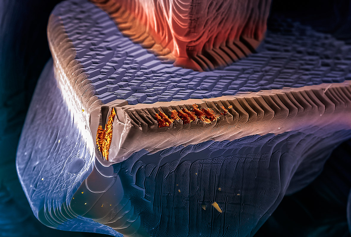 CIGS, semiconductor on thin film solarphotovoltaic cells