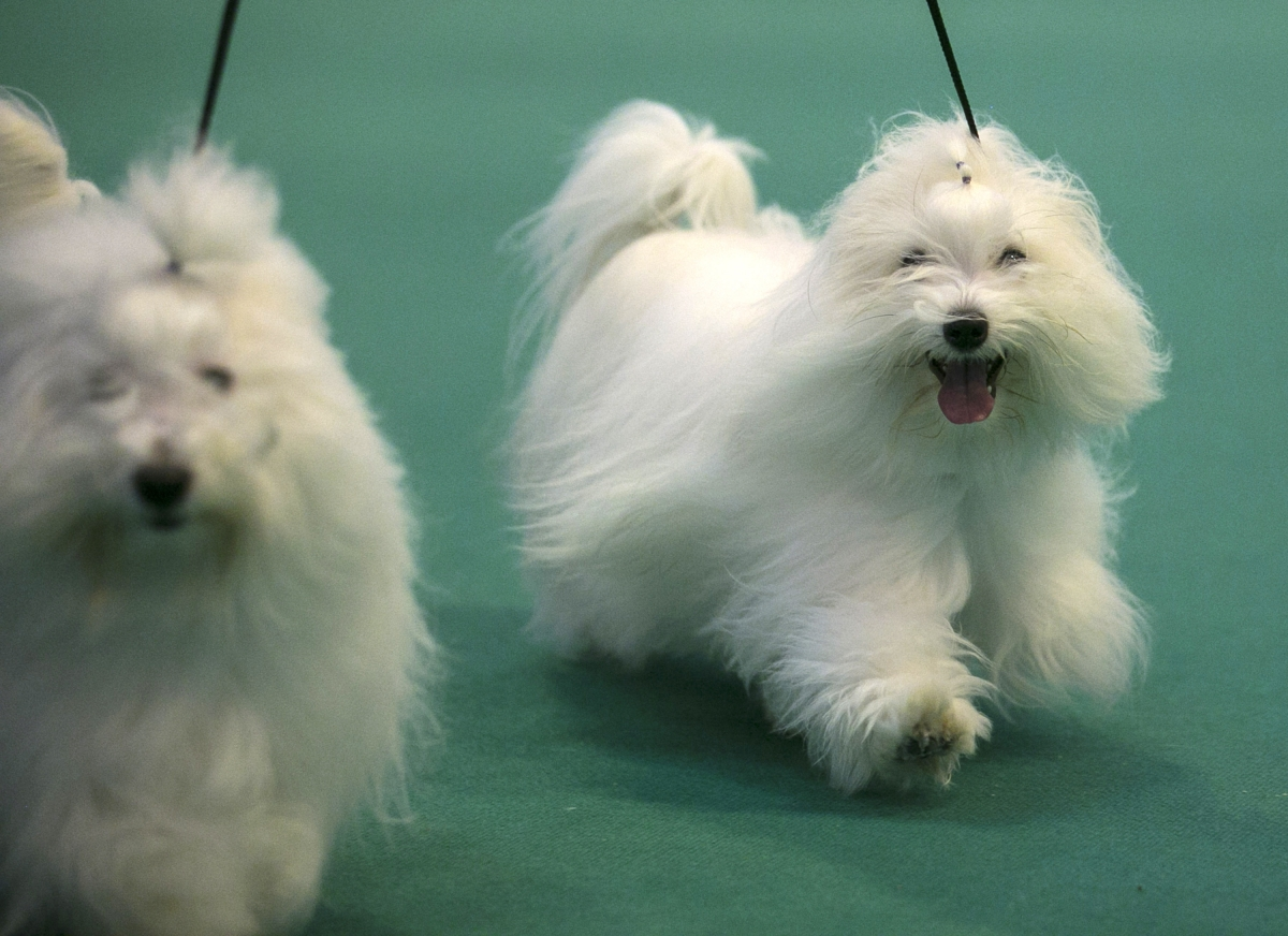 Pets at Home Prices IPO at £1.2bn