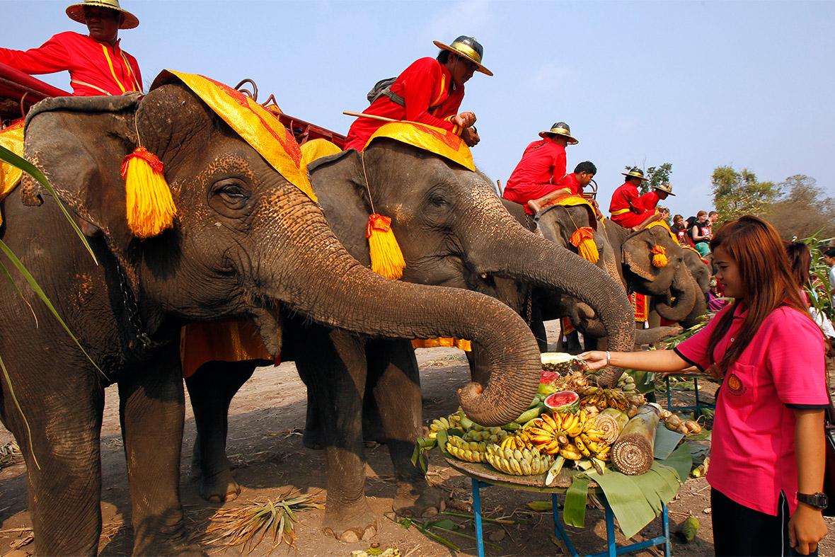 elephant buffet