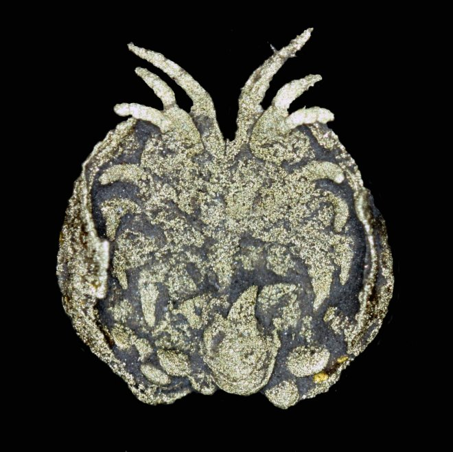 Luprisca Incuba - a 450 million year-old fossil containing a