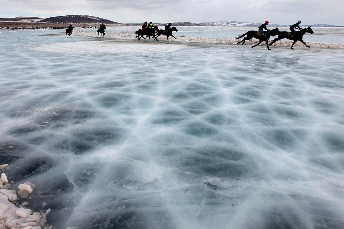 horses ice