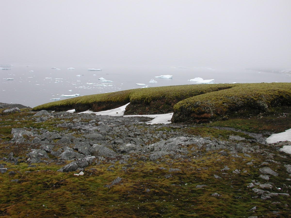 ancient moss