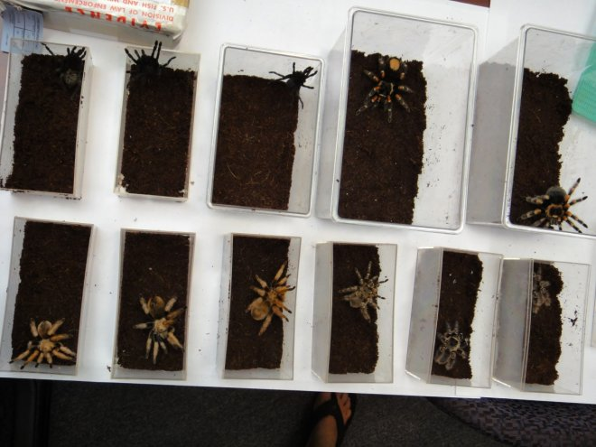 Top Ten Most Bizarre Items Seized at Customs from Tarantulas to a
