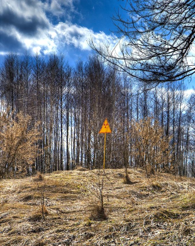 Red Forest Chernobyl