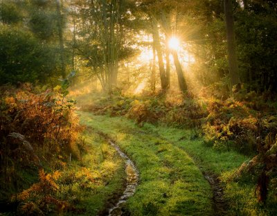 Graham Colling, Early Light, Newlands Wood, Cannock, UK