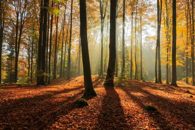 Mateusz Liberra, Morning forest light, North Poland