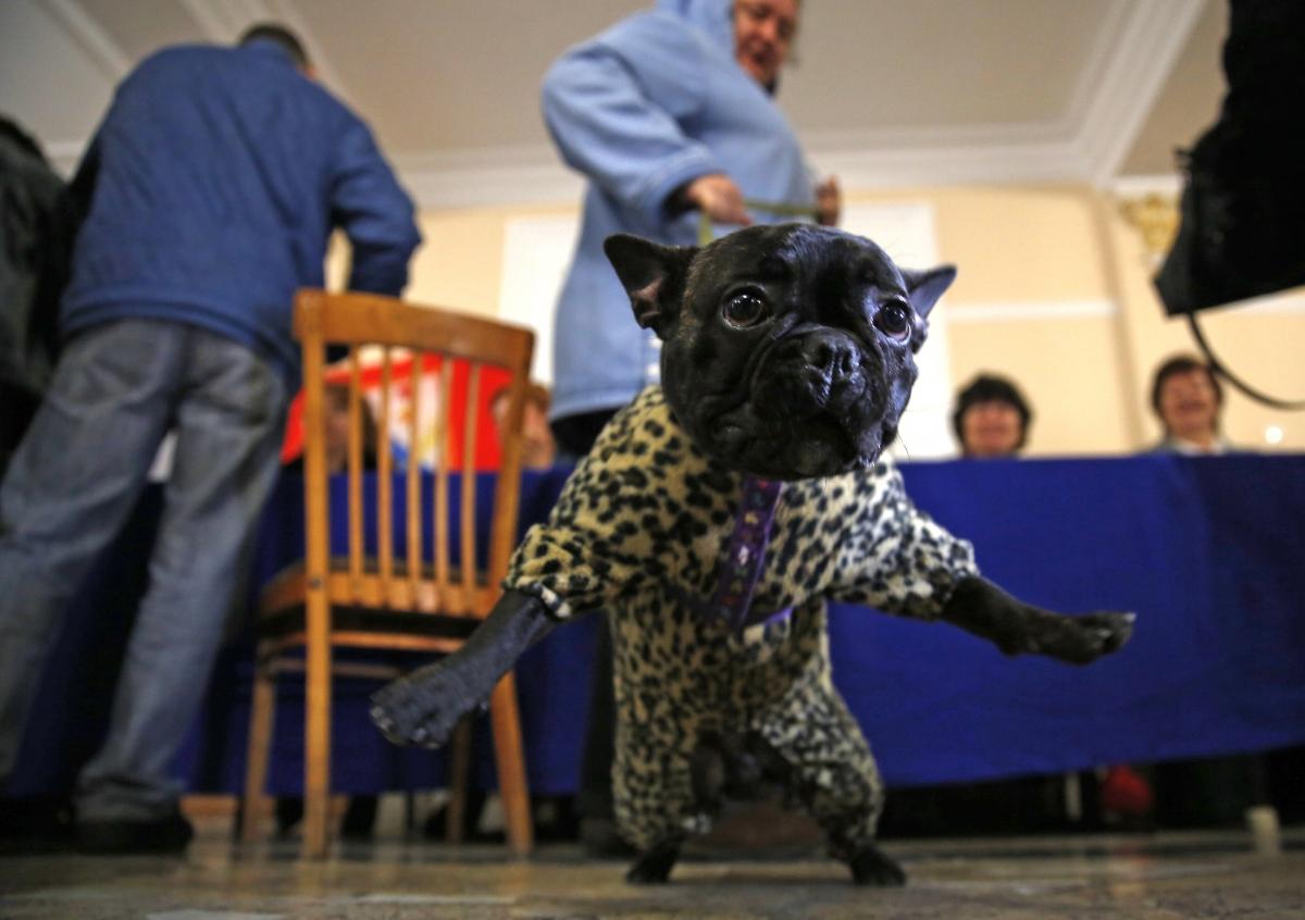 Dog in Crimea