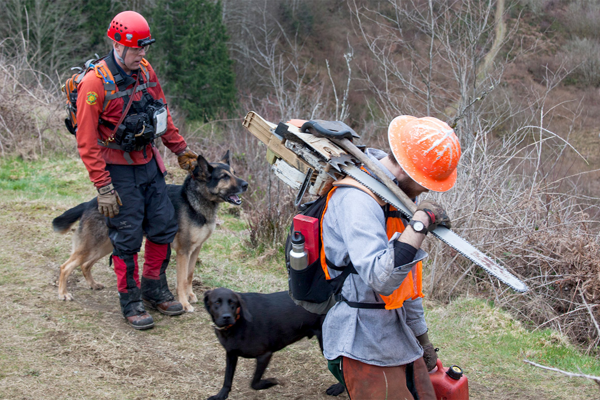 search dogs