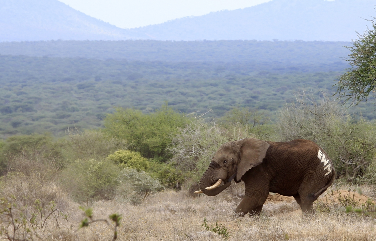 Unmanned flying drones are to be used to patrol Kenyan national parks for elephant and rhino poachers