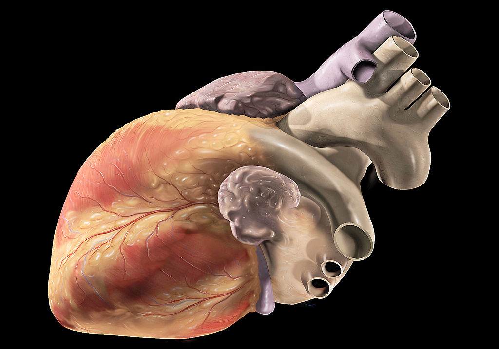 Scientists To Create World U0026 39 S First 3d Printed Heart