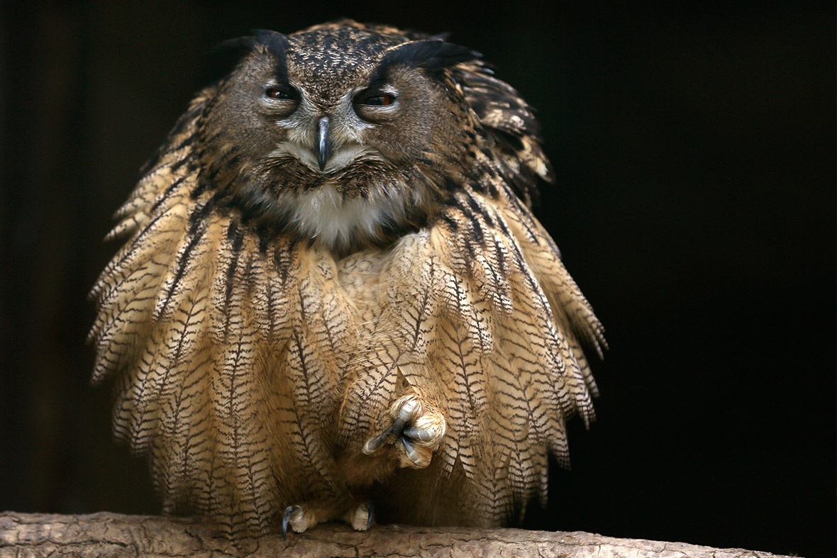 Hot Shots Photos Of The Day Happy Owl Army Diver Kim Dotcom