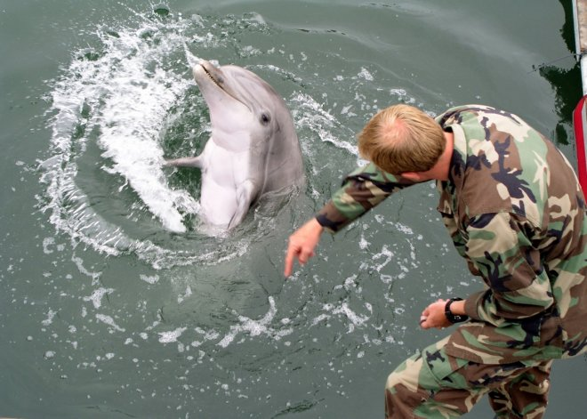 Russian navy acquires Crimea's combat dolphins and seals following annexation